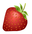 Strawberry fruit isolated on white background vector image vector image