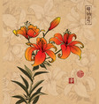 orange lily flowers on vintage background with vector image vector image