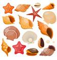 shells and sea stars icon set vector image vector image