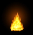 Realistic fire flames vector image