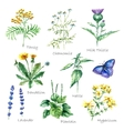 collection hand drawn medical herbs and plants vector image