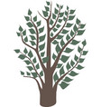 green tree with leaves vector image