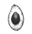 hand drawn sketch of half avocado in black color vector image vector image