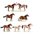 horse life with all stages including birth mother vector image vector image