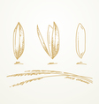 Rice grains Sketch hand drawn vector image