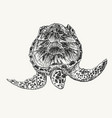 swimming turtle sketch vector image vector image