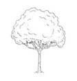 cartoon drawing of tree vector image