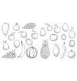 tropical fruit and fresh berry isolated sketches vector image vector image