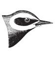 blue golden winged warbler vintage vector image vector image