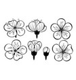 set outline sakura flowers vector image vector image