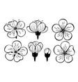 set outline sakura flowers vector image