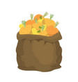 turnip burlap bag sack of vegetables big crop on vector image vector image