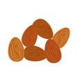 almond nuts vector image vector image