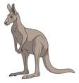 color a gray kangaroo vector image