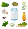 empty jar and fresh ingredients for pickles vector image vector image