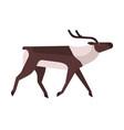 majestic deer reindeer flat vector image