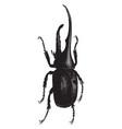 dynastes hercules vintage vector image vector image