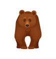large forest bear standing on four paws front vector image vector image