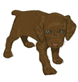 Little puppy on a white background vector image