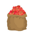 tomato burlap bag sack of vegetables big crop on vector image vector image