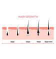 hair growth cycle skin follicle anatomy anagen vector image