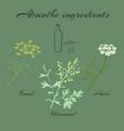 herbs absinthe ingredients vector image vector image