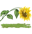 sunflower on white vector image
