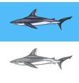thresher shark and atlantic bull shark or mackerel vector image