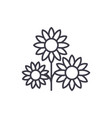 buttercup line icon concept buttercup flat vector image