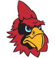 cardinal head logo mascot vector image vector image