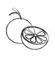 citrus orange fruit vitamins nutrition health food vector image vector image
