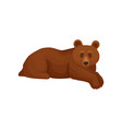 cute big bear lying isolated on white background vector image vector image