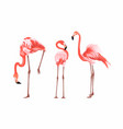 exotic pink flamingo birds couple vector image