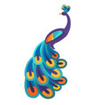 peacock with bright feathers isolated vector image vector image