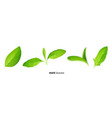 realistic fresh mint tea green leaves on white vector image vector image
