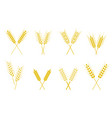 set of simple wheats ears icons and wheat design vector image vector image