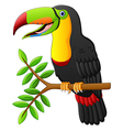 toucan cartoon sitting on the branch vector image vector image