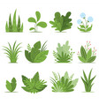 bushes plants and herbs collection vector image