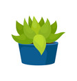 flat icon of cactus with green leaves in vector image vector image