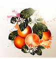 realistic oranges with flowers for design vector image vector image