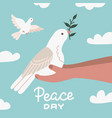 white dove with olive branch sittting in human vector image vector image