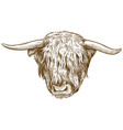 engraving of highland cattle head vector image