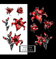red lilies hand elements vector image