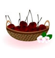 basket of cherries vector image