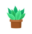 cactus with bright green leaves in brown ceramic vector image vector image