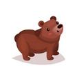 cute brown bear cub cartoon vector image vector image