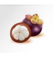 mangosteens queen of fruits mangosteen on vector image vector image