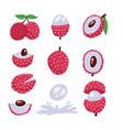 big set if lychee - tropical fruit modern flat vector image vector image