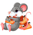 cute animated mouse eating chocolate isolated on vector image