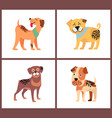 Adorable small puppies with happy excited faces vector image